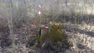 Training-Vogelsdorf-Markierung-Beispiel-2